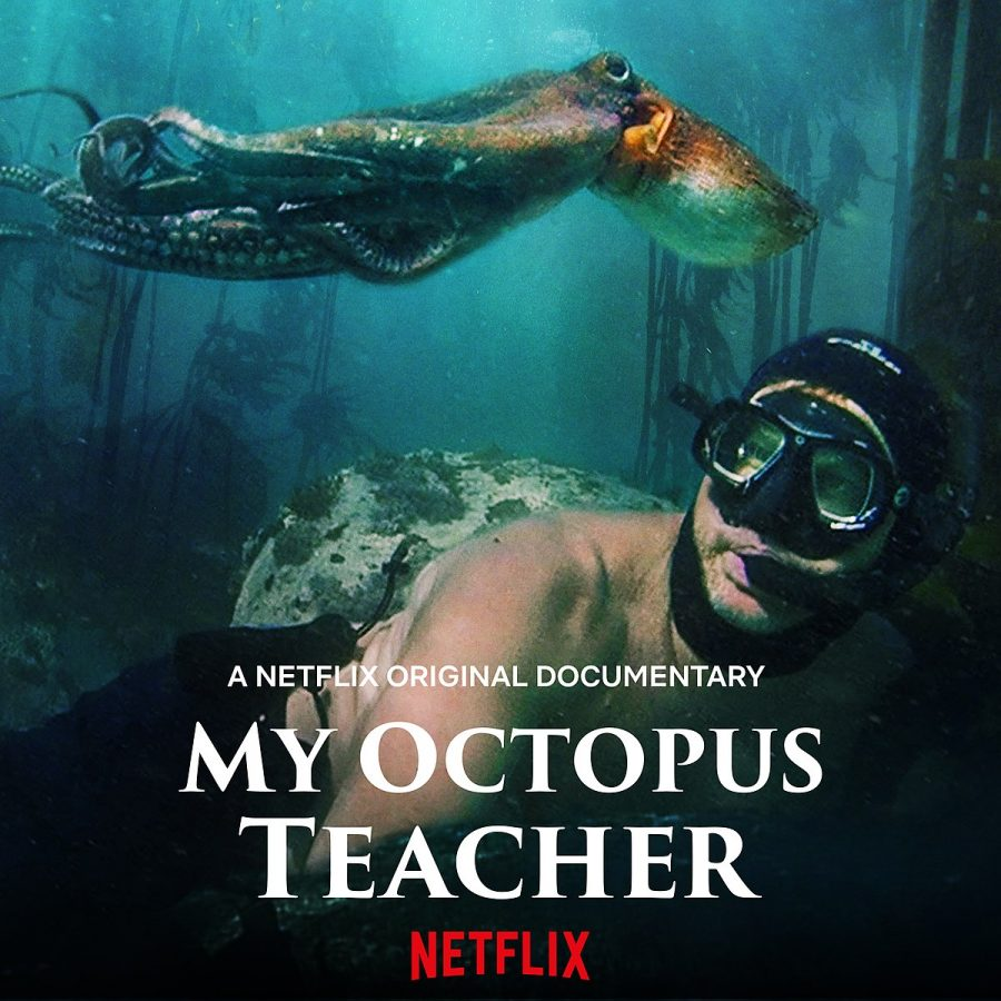 'My Octopus Teacher' Review