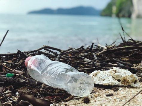 Climate Change and Single-Use Plastics Will Cause Irreversible Damage To Miami's Oceans