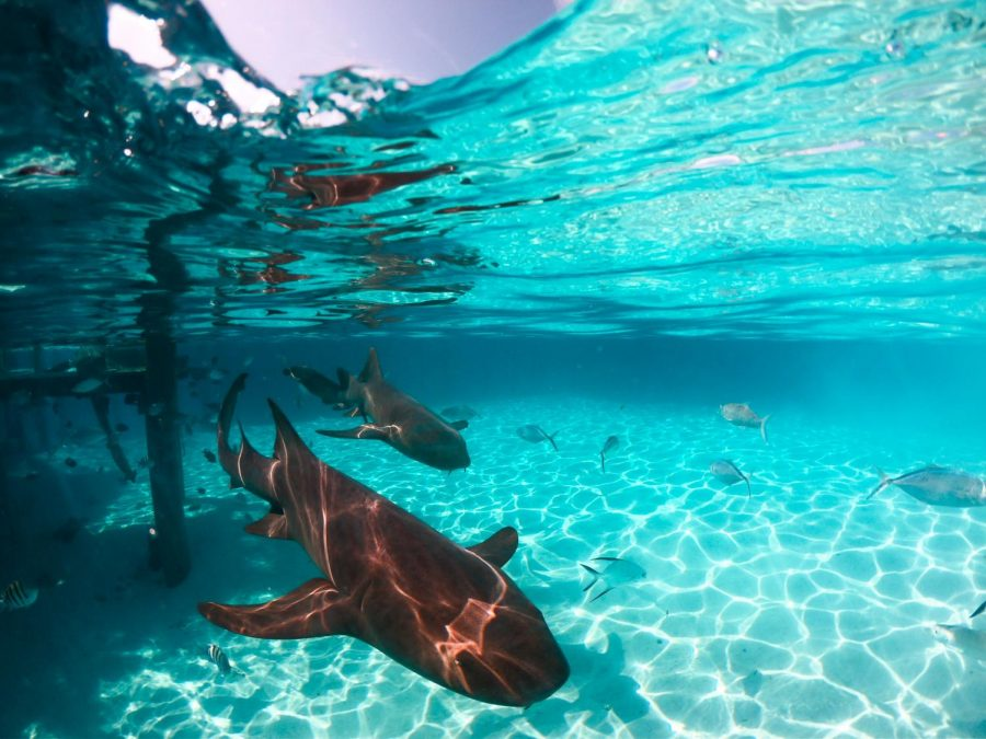 Sharks Being Killed and Sold Disguised as Daily Fish and Cosmetic Products